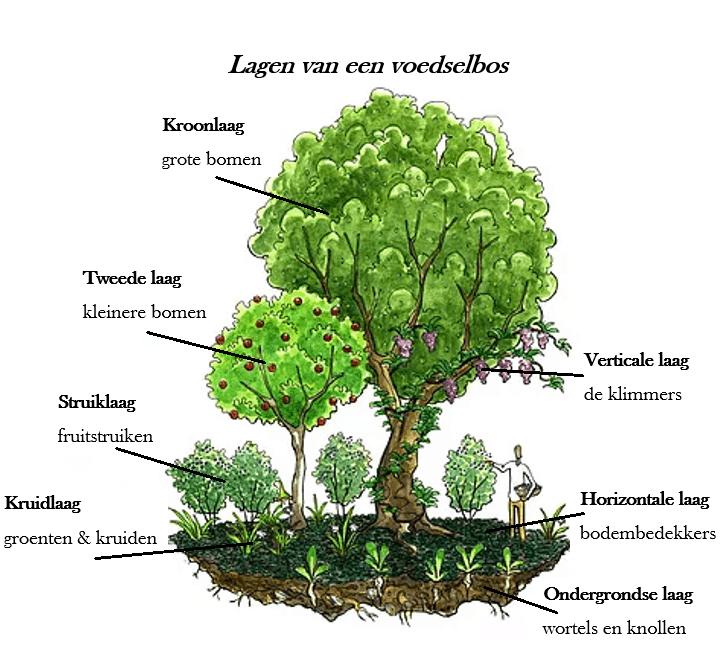 Een voedselbos bevat vele lagen. Het is productie in 3 dimensies.